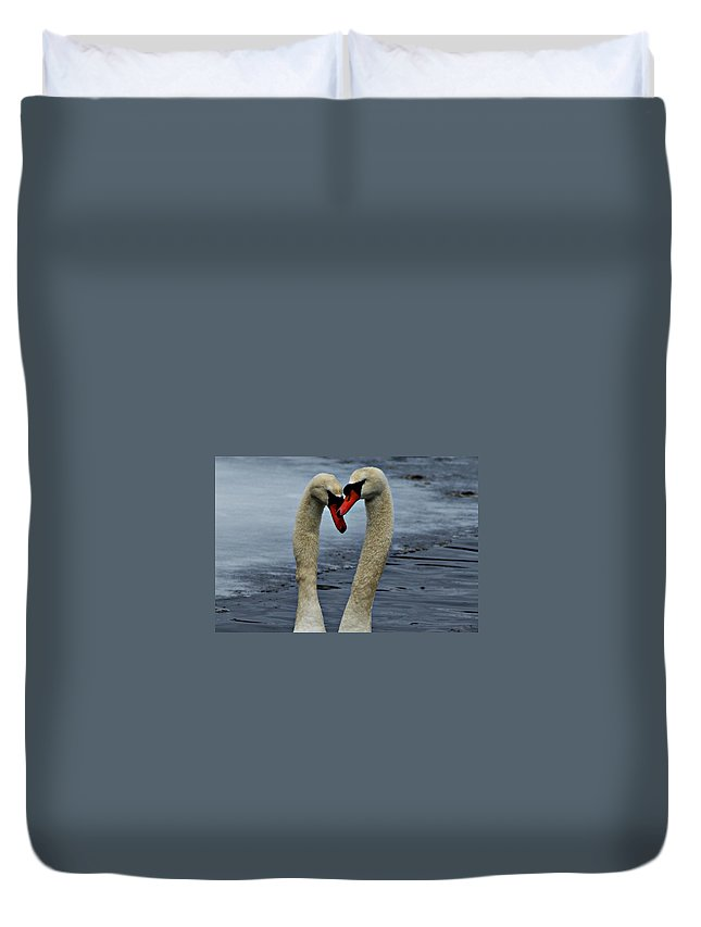 Horn Pond Duvet Cover featuring the photograph Courting Swans by Joe Faherty