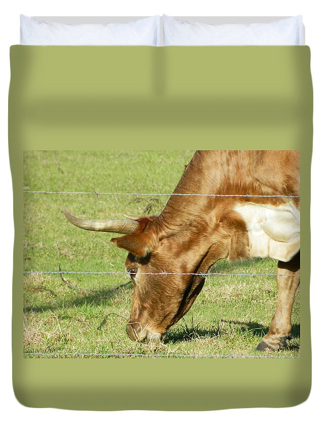 Cow Duvet Cover featuring the photograph Cow by George Pedro