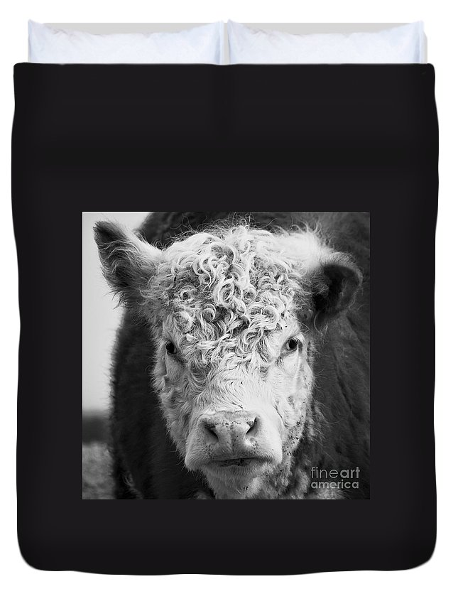 Cow Duvet Cover featuring the photograph Cow Square by Edward Fielding