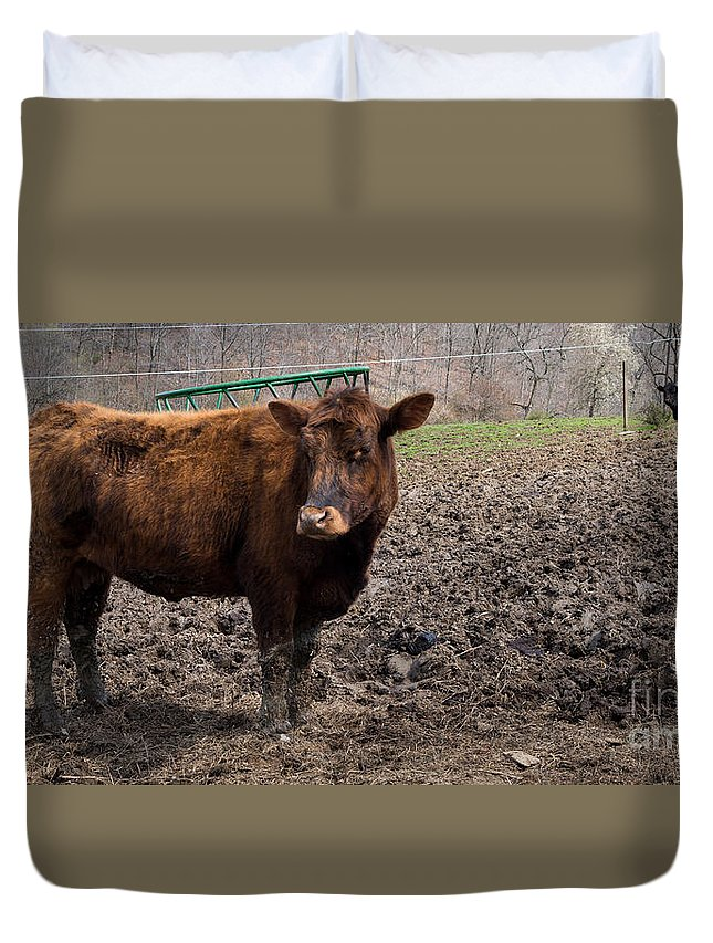Brown Cow Duvet Cover featuring the photograph Cows by Amy Cicconi