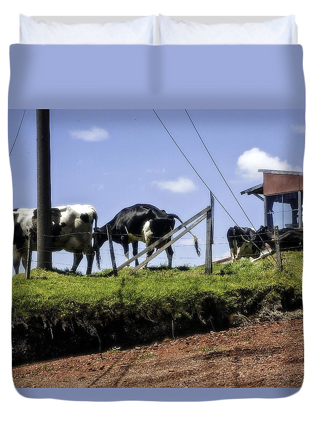 Cows Duvet Cover featuring the photograph Cows - Costa Rica by Madeline Ellis