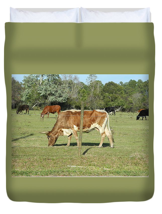 Cow Duvet Cover featuring the photograph Cows Grazing by George Pedro