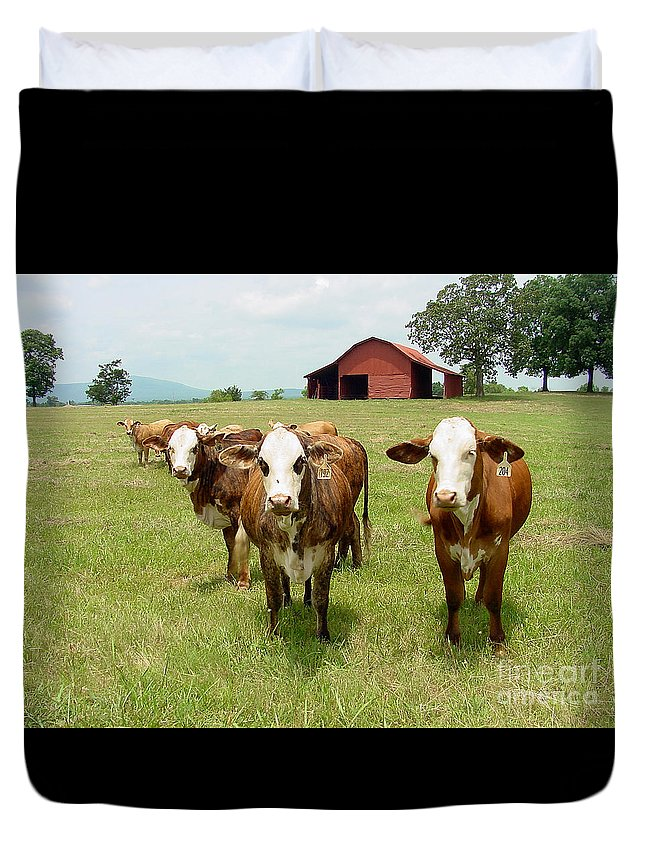 Cow Duvet Cover featuring the photograph Cows8931 by Gary Gingrich Galleries