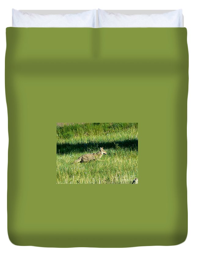 Wildlife Duvet Cover featuring the photograph Coyote In Boulder Higlands by Rincon Road Photography By Ben Petersen