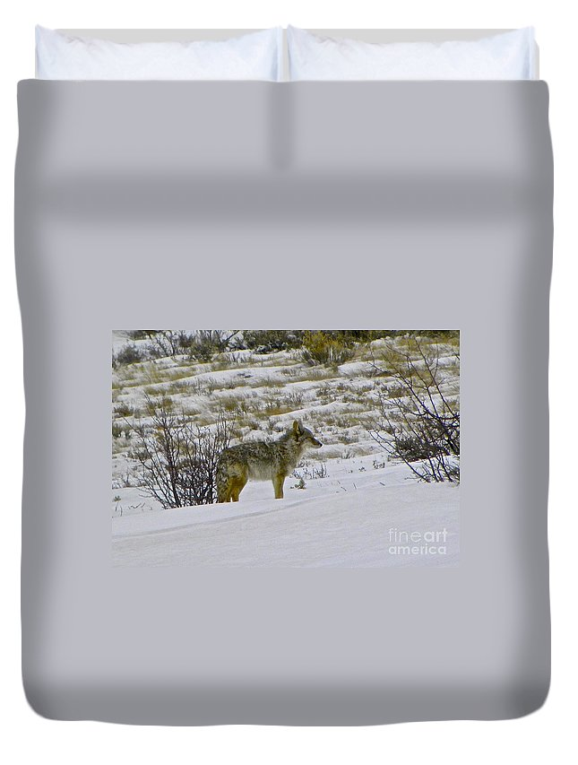 Coyote Duvet Cover featuring the photograph Coyote In The Snow by Tisha Clinkenbeard