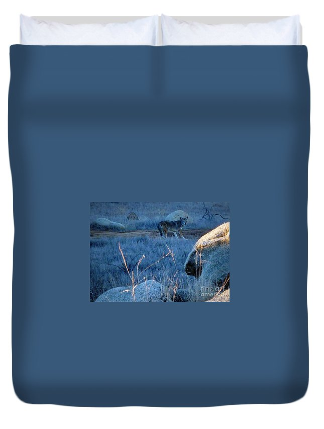 Coyote Wild Duvet Cover featuring the photograph Coyote Wild by Susan Garren