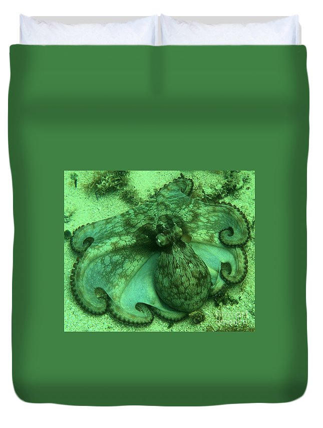 Common Octopus Duvet Cover featuring the photograph Cozumel Octopus by Adam Jewell