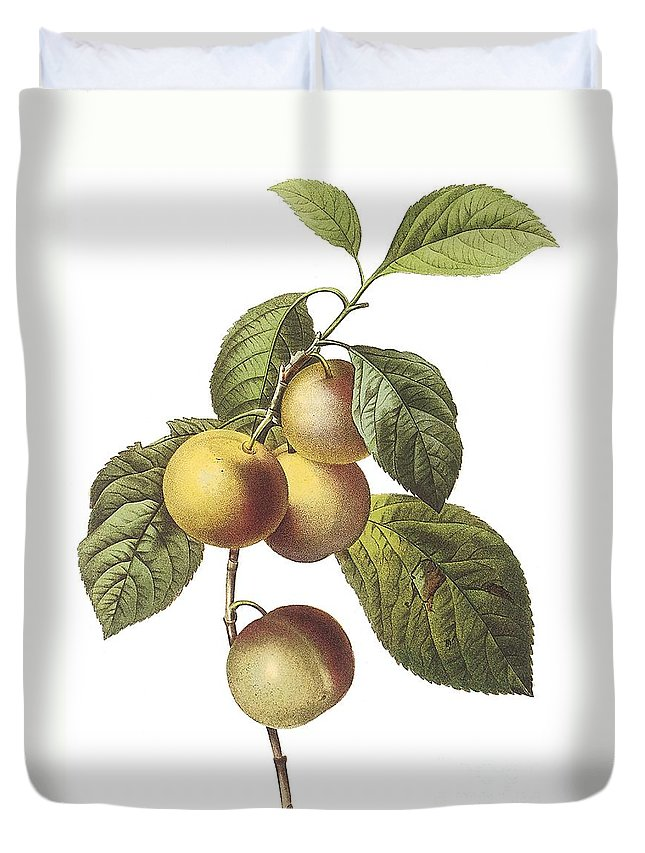 Fruit Duvet Cover featuring the drawing Crab Apple by Spencer McKain