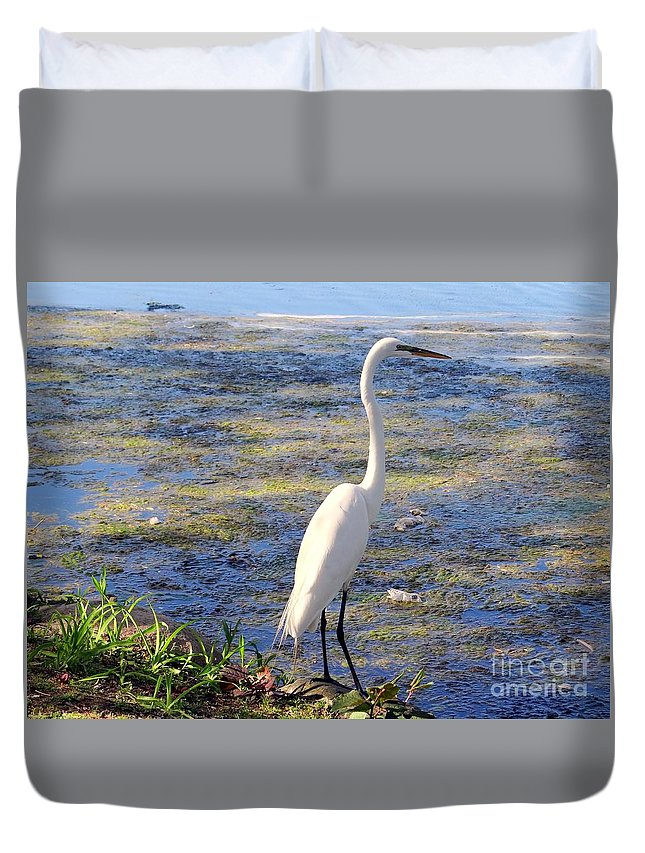 Nature Duvet Cover featuring the photograph Crane At Pond by Ed Weidman