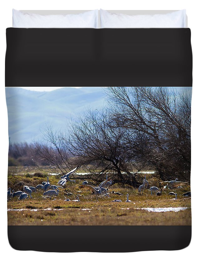 Cranes Duvet Cover featuring the photograph Cranes And Mixed Ducks by Brian Williamson