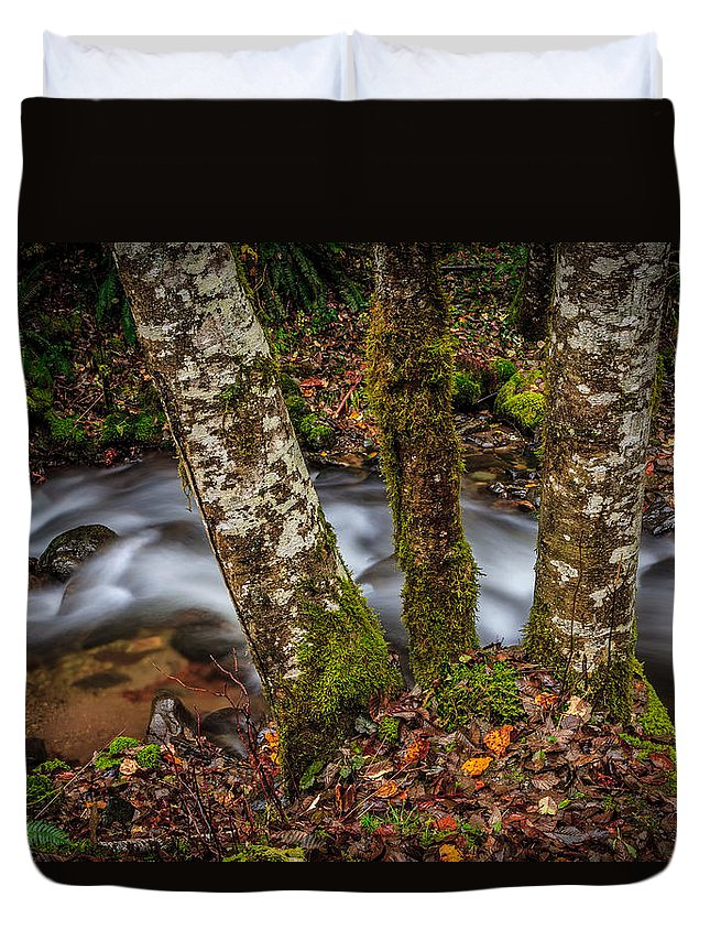 A Creek Passes Behind 3 Trees Duvet Cover featuring the photograph Creek With Trees by Mike Penney
