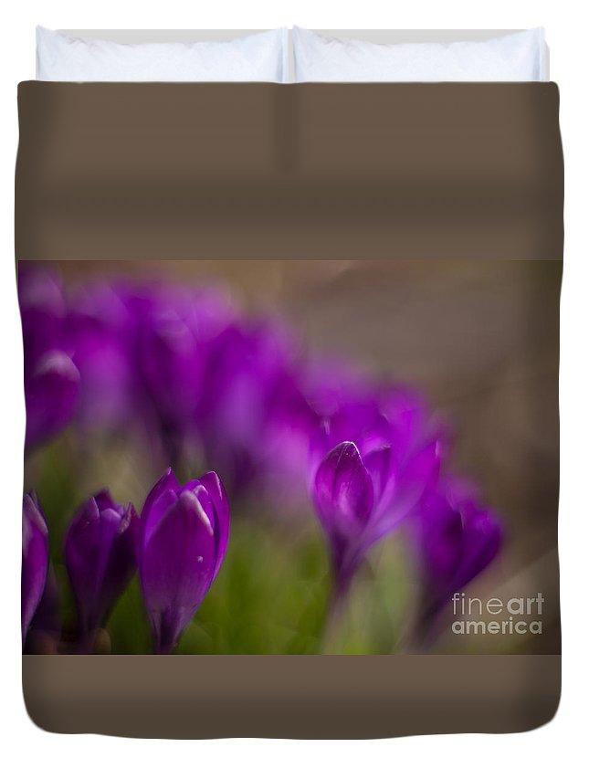 Crocus Duvet Cover featuring the photograph Crocus Purple Haze by Mike Reid