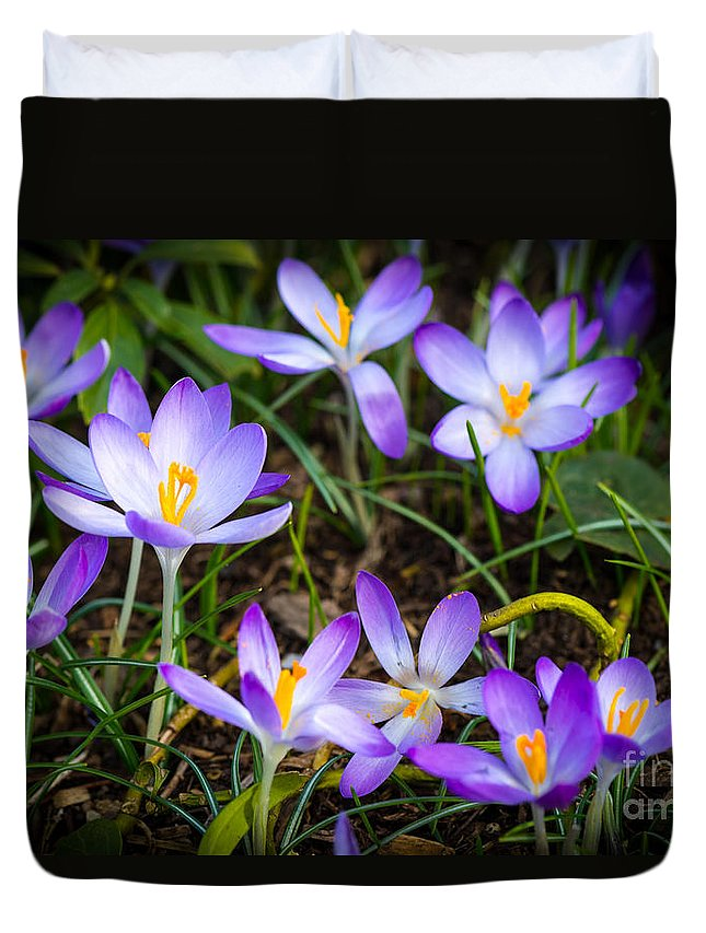 London Duvet Cover featuring the photograph Crocuses by Matt Malloy