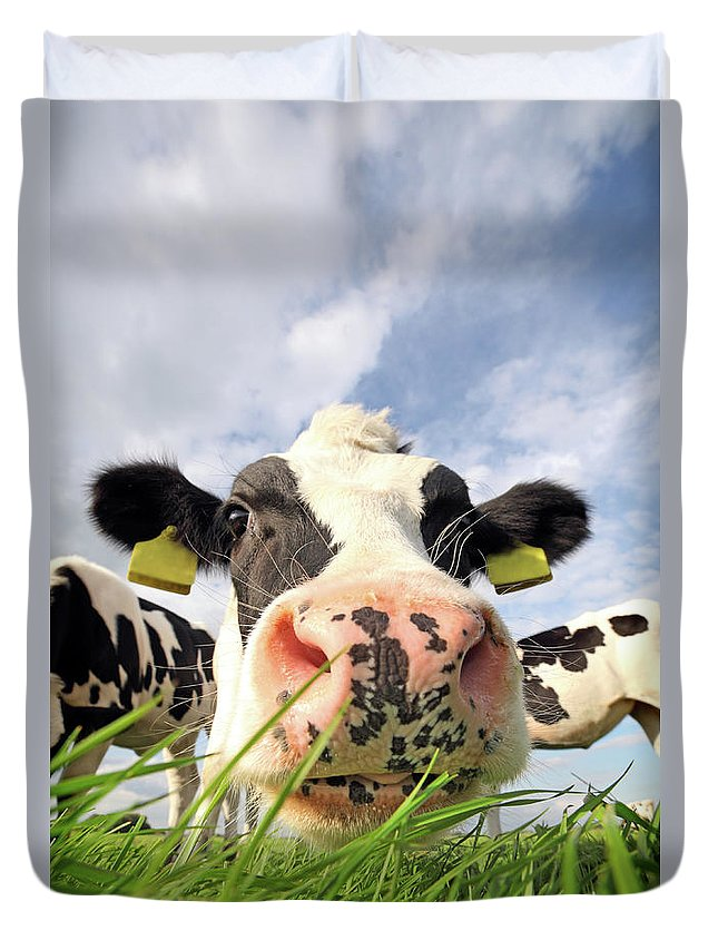 Grass Duvet Cover featuring the photograph Curious Cow by Marcel Ter Bekke