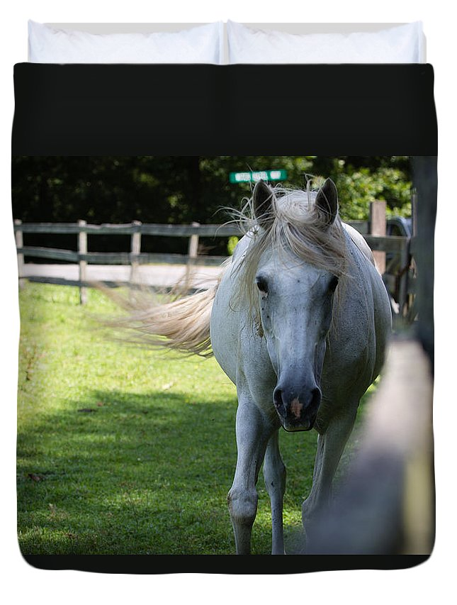 Horse Duvet Cover featuring the photograph Curious Horse by Christy Cox