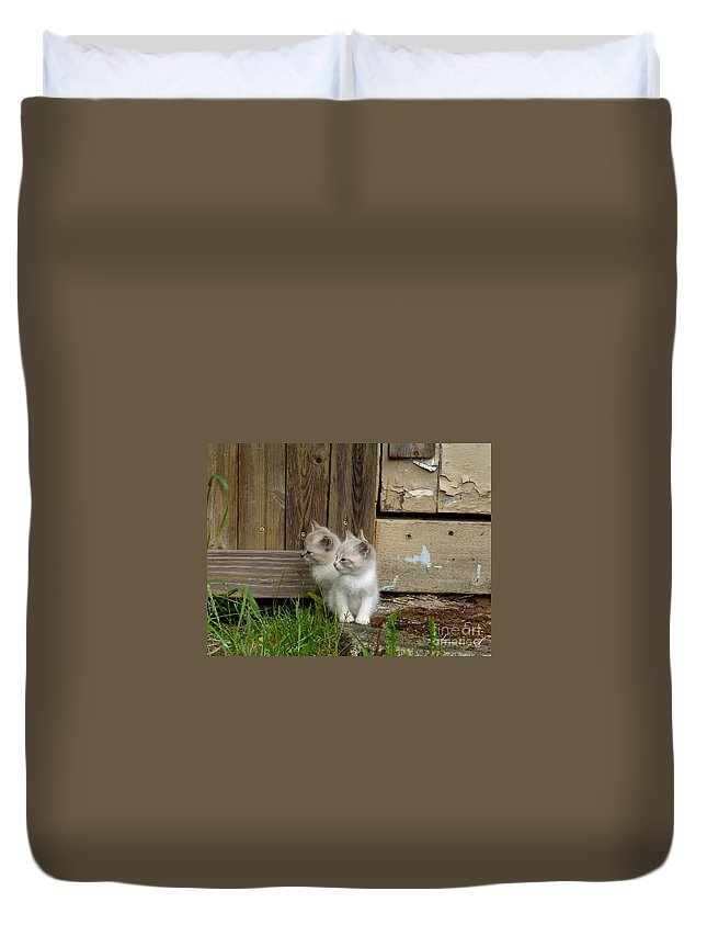 Kittens Duvet Cover featuring the photograph Curious Kittens by Rain Shine
