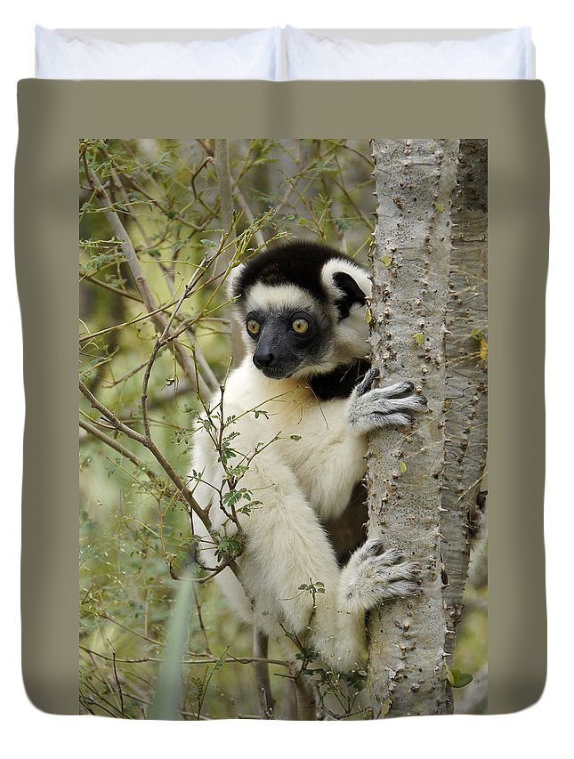 Africa Duvet Cover featuring the photograph Curious Sifaka 2 by Michele Burgess
