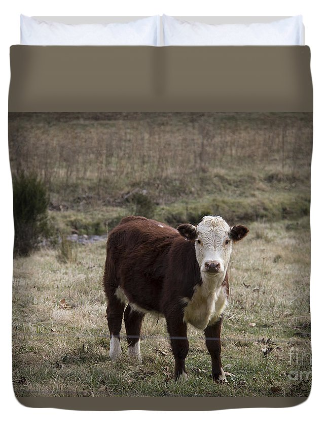 Cow Duvet Cover featuring the photograph Curious by Teresa Mucha