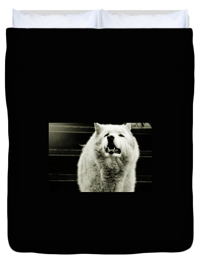Wild Side Duvet Cover featuring the photograph Curious Wolf Breed by Chastity Hoff