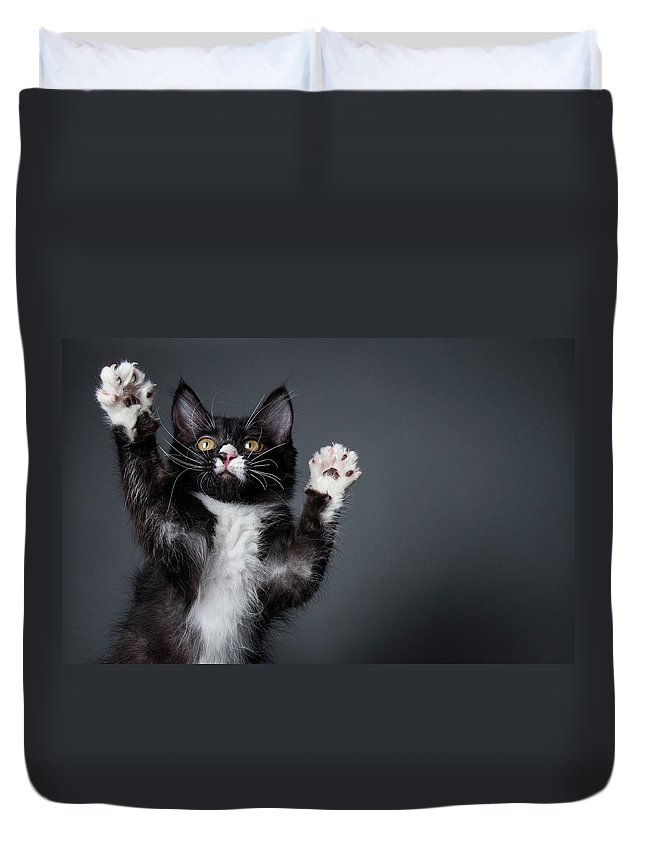 Pets Duvet Cover featuring the photograph Cute Kitten Playing - The Amanda by Amandafoundation.org