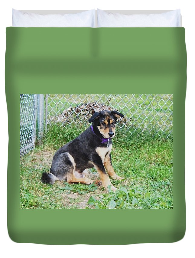 Dog Duvet Cover featuring the photograph Cute Kody by Lisa Wormell