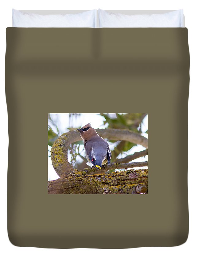 Birds Duvet Cover featuring the photograph Cyder Wax Wing by Brian Williamson
