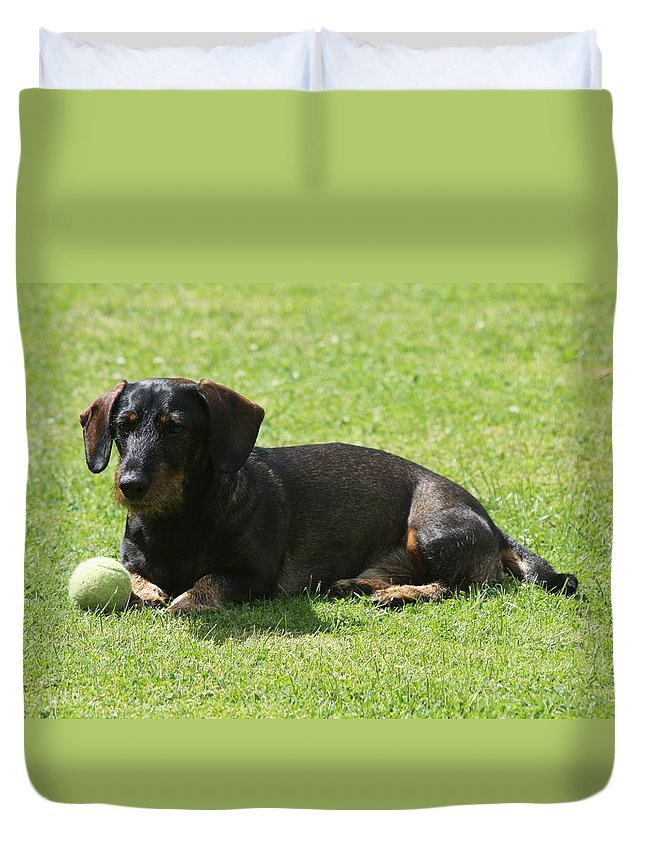 Dog Duvet Cover featuring the photograph Dachshund Wants To Play by Christiane Schulze Art And Photography