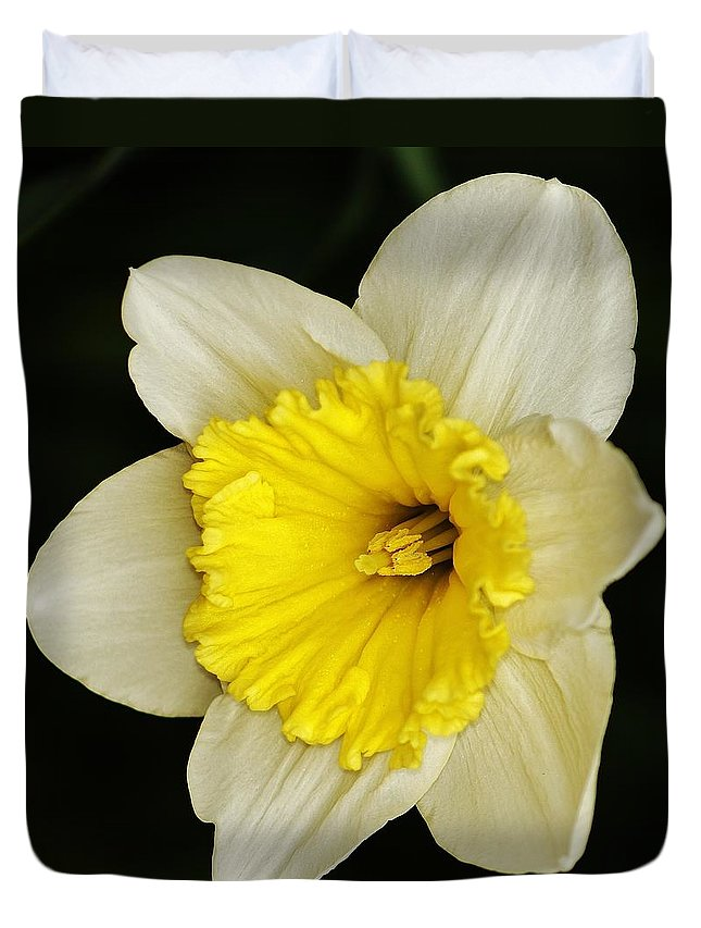 Duvet Cover featuring the photograph Daffodil 2014 by Daniel Thompson