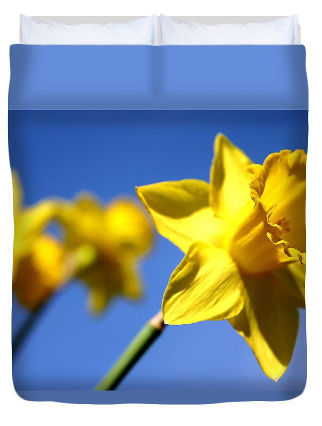 Daffodils Duvet Cover featuring the painting Daffodil Line by Sarah OToole