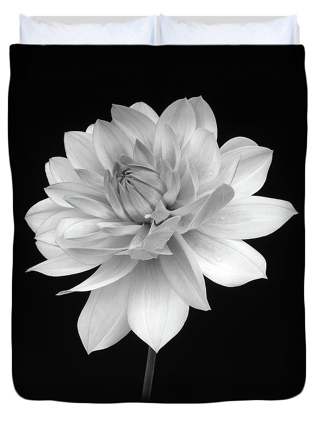 Haslemere Duvet Cover featuring the photograph Dahlia In Gentle Shades Of Grey by Rosemary Calvert