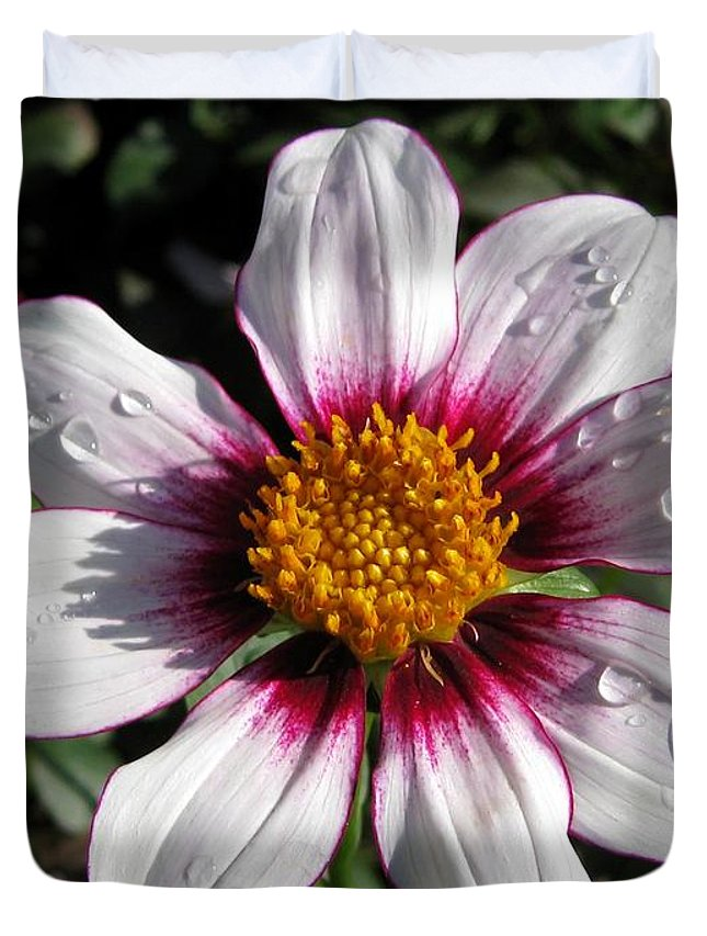 Mccombie Duvet Cover featuring the photograph Dahlia Named Mii Tai by J McCombie