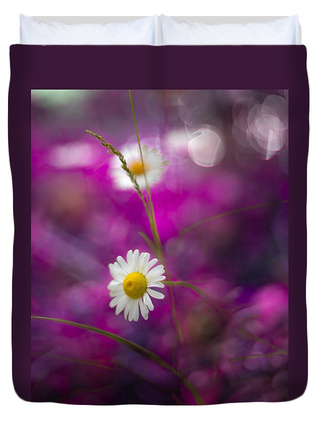Canada Duvet Cover featuring the photograph Daisies by Jakub Sisak