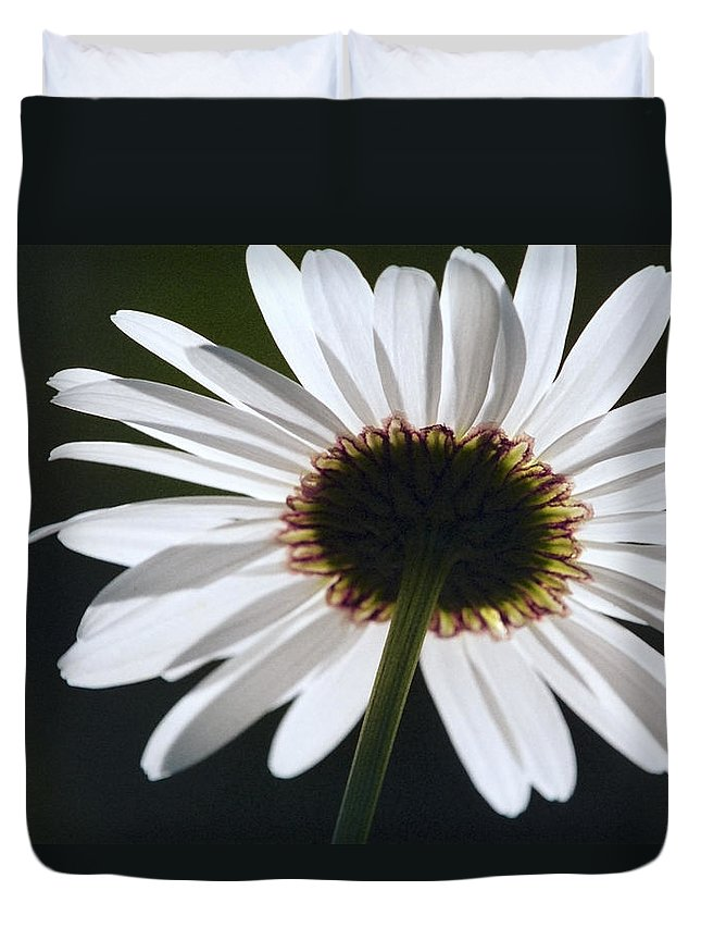 Asteraceae Duvet Cover featuring the photograph Daisy by Patrick Kessler