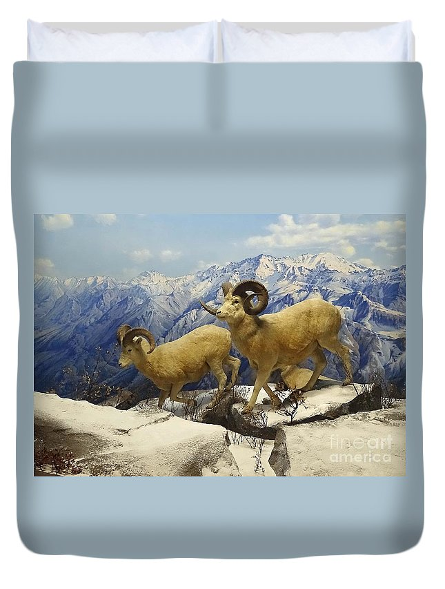 Animals Duvet Cover featuring the photograph Dall Sheep Diorama by Cindy Manero