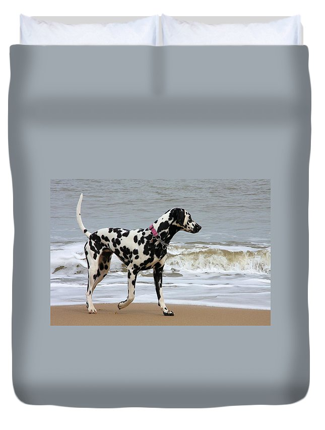Dalmatian By The Sea Duvet Cover featuring the photograph Dalmatian By The Sea by Gordon Auld