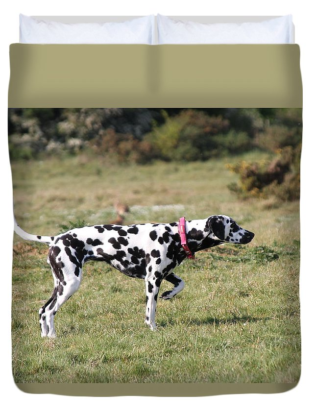 Dalmatian Pretending To Be A Pointer Duvet Cover featuring the photograph Dalmation Pretending To Be A Pointer by Gordon Auld