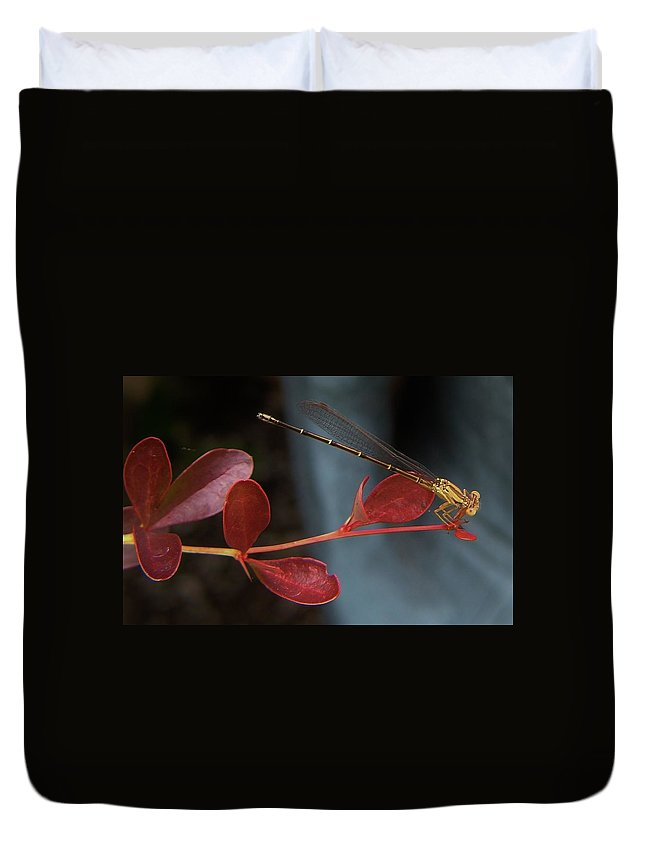 Damselfly Duvet Cover featuring the photograph Damselfly On End Of Burning Bush Stem       Summer        Indiana by Rory Cubel