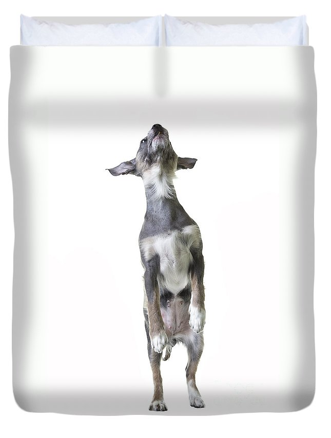 Dog Duvet Cover featuring the photograph Dancing Dog by Edward Fielding