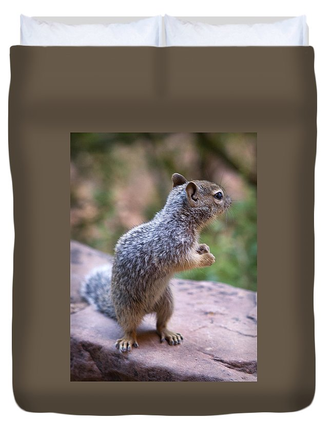 Mountain Duvet Cover featuring the photograph Dancing Squirrel by Marilyn Hunt