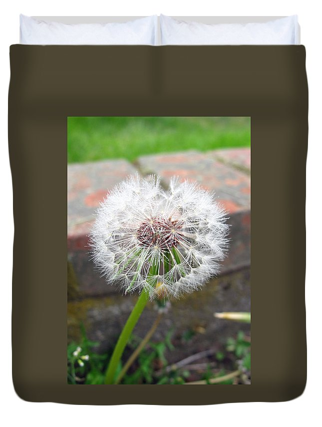 Weed Duvet Cover featuring the photograph Dandelion Tada by Barbara McDevitt