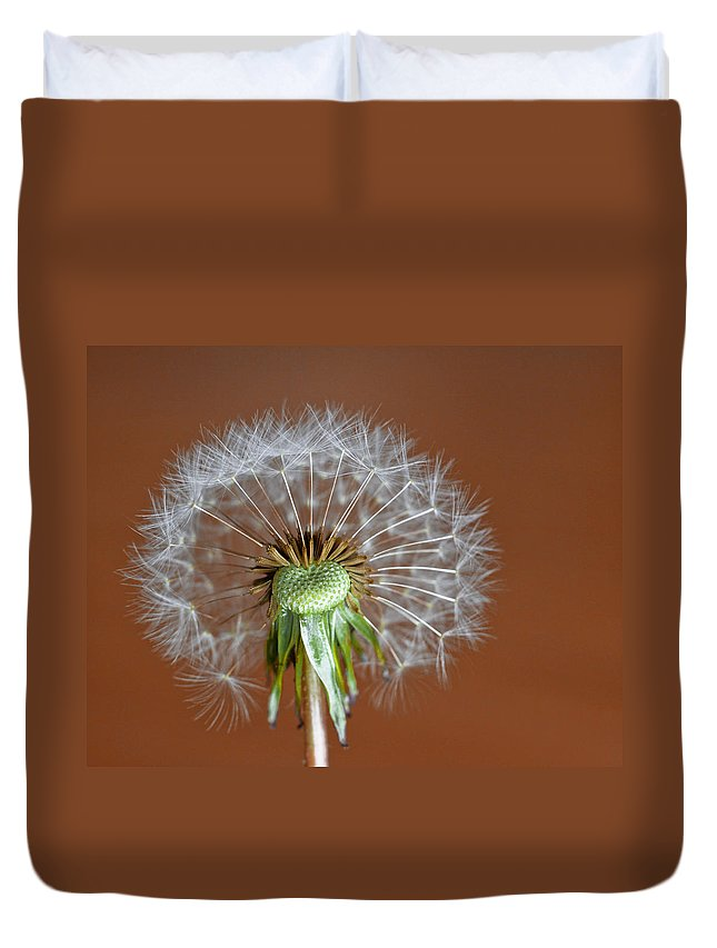 Dandelion Duvet Cover featuring the photograph Dandy by David and Carol Kelly