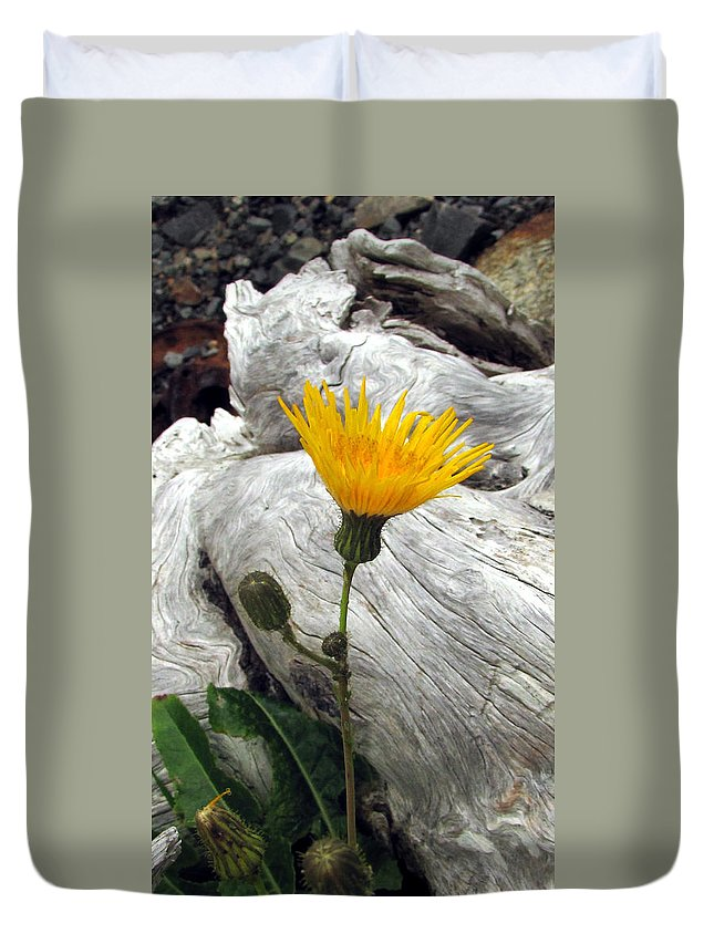 Dandelion Duvet Cover featuring the photograph Dandy Driftwood by Jennifer Wheatley Wolf