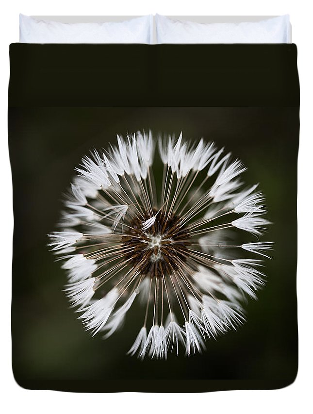 Canada Duvet Cover featuring the photograph Dandylion After Rain by Jakub Sisak