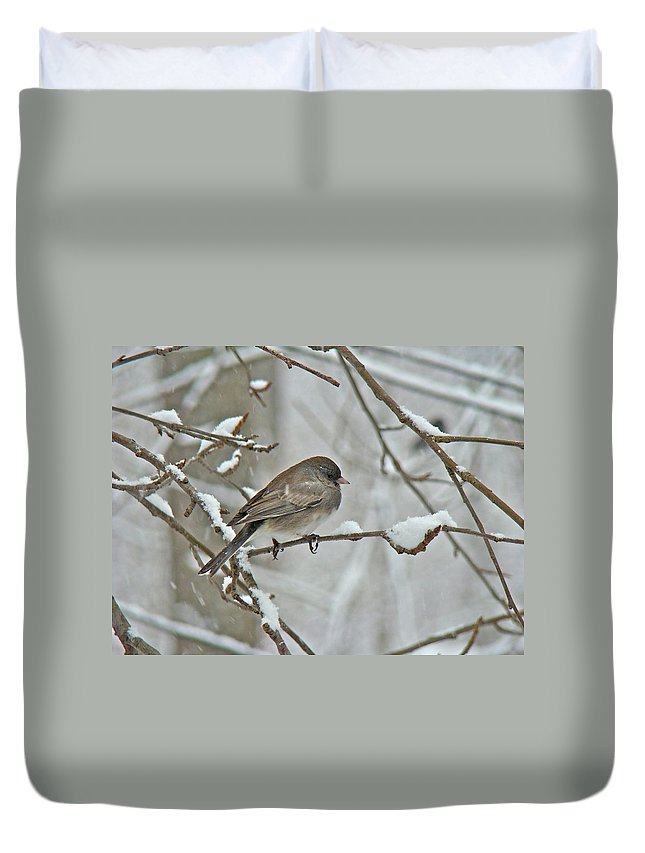 Junco Duvet Cover featuring the photograph Dark-eyed Junco Or Snowbird - Junco Hyemalis by Mother Nature