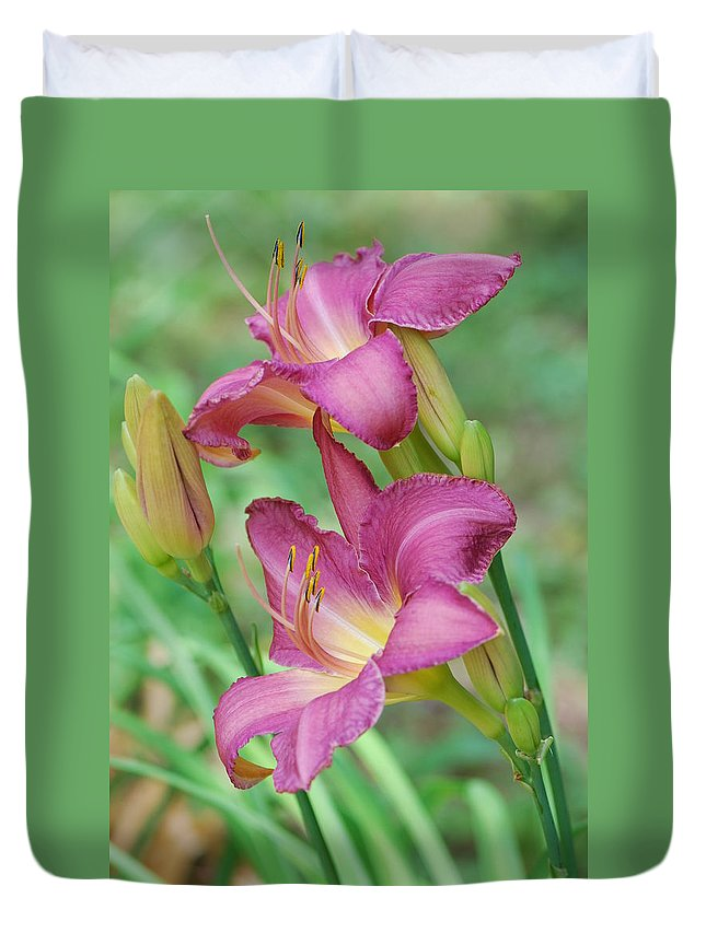 Daylily Duvet Cover featuring the photograph Dark Pink Daylilies by Amy Porter