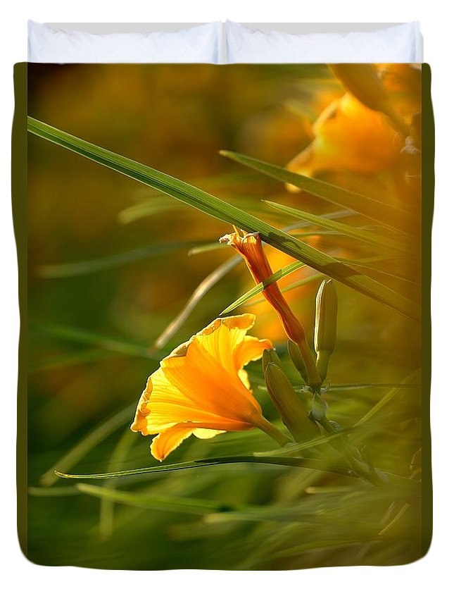 Daylily Duvet Cover featuring the photograph Day Lily Backlit by Kenny Glotfelty