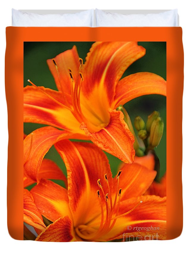 Tawny Daylily Duvet Cover featuring the photograph Daylily Duo by Regina Geoghan