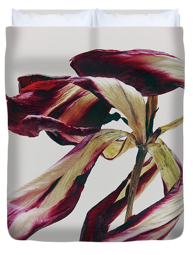 White Background Duvet Cover featuring the photograph Dead Flower by Stilllifephotographer