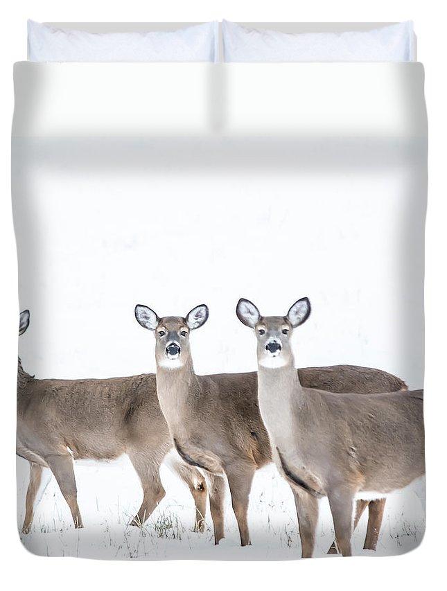 Duvet Cover featuring the photograph Deer Deer Deer by Cheryl Baxter