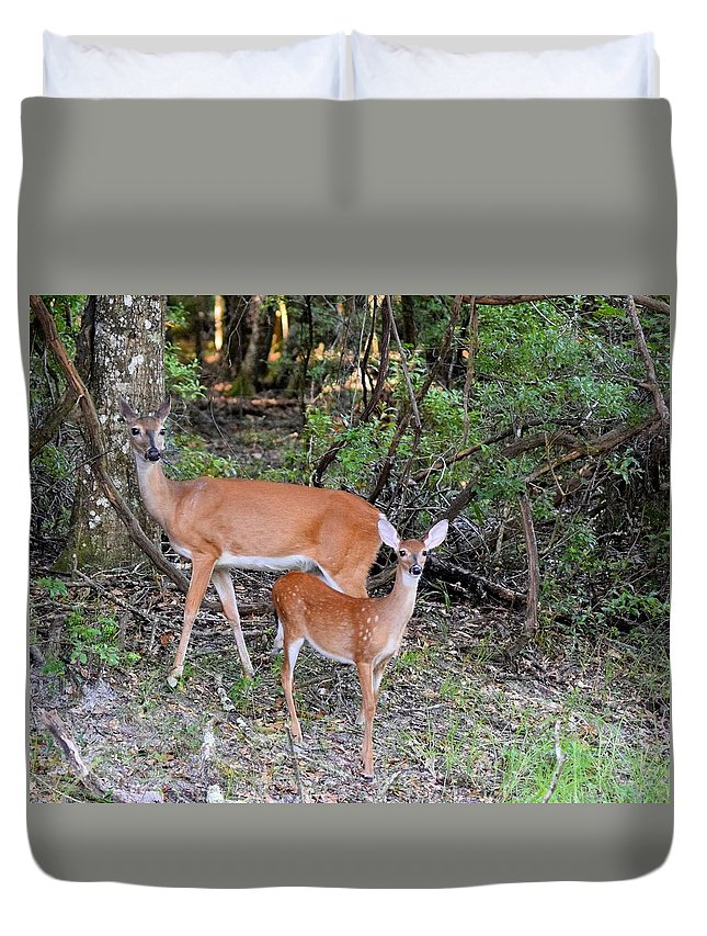 Doe Duvet Cover featuring the photograph Deer Mom 2 by Sheri McLeroy